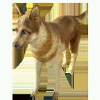 pet_dog_0077_1