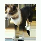 pet_dog_0078_1