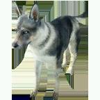 pet_dog_0079_1