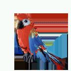 pet_parrot_0001_1
