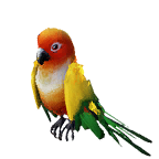 pet_parrot_0011_1