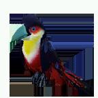 pet_parrot_0012_1