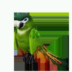 pet_parrot_0013_1