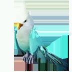 pet_parrot_0014_1