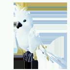 pet_parrot_0015_1