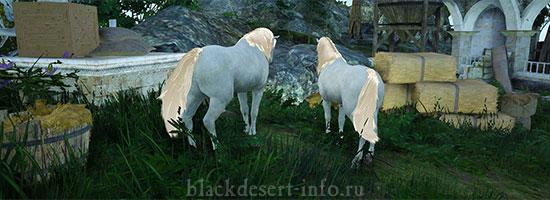 разведение лошадей бдо
