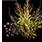 семена сухой травы